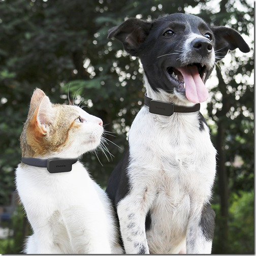 pet-tracker-cat-dog